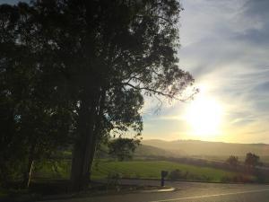 Templeton Sunrise
