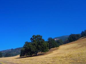 Photo-Tejon-Ranch 1